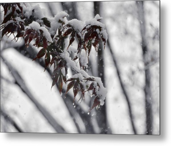 Fall Flurry Metal Print by JAMART Photography