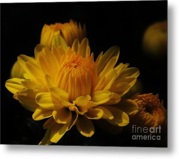 Fall Gold Metal Print by Aubrey Campbell