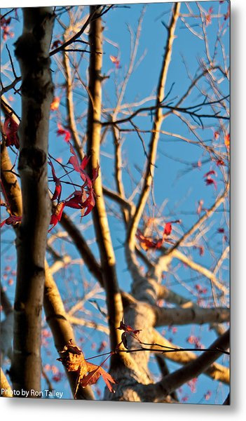 Fall Is On It's Way Metal Print by Ronald Talley