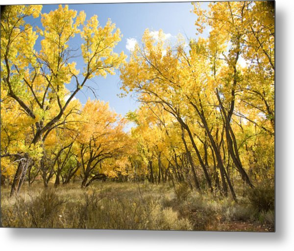 Fall Leaves In New Mexico Metal Print