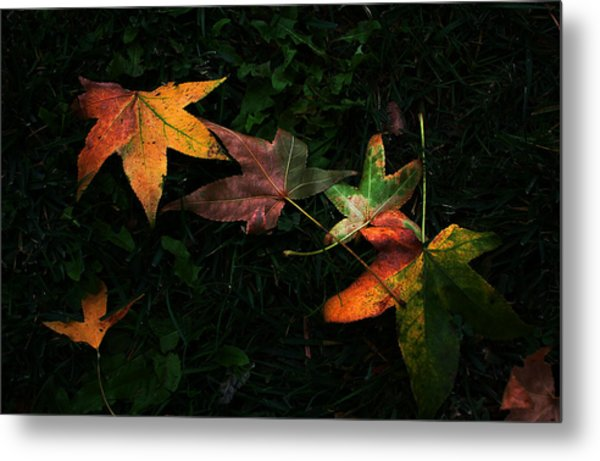 Fall Leaves On Grass Metal Print