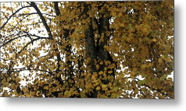 Fall Leaves Panorama Metal Print by Mary Gaines