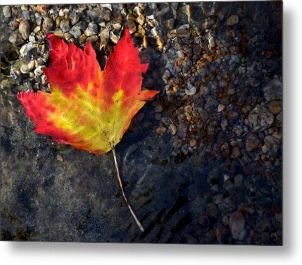 Fall Maple Leaf In Stream   Metal Print