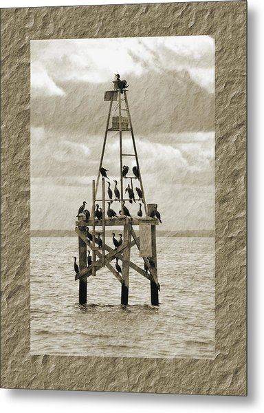 Metal Print featuring the photograph Family Reunion by Donna Proctor
