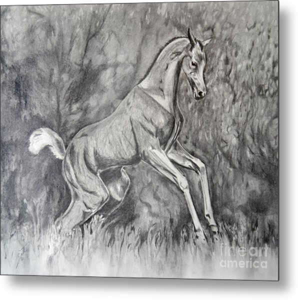 Fancifilly Metal Print