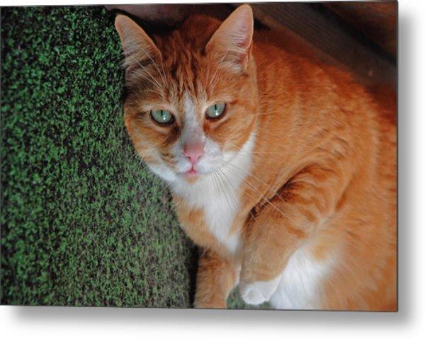 Fat Cats Of Ballard 6 Metal Print