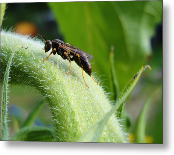Fears Calmed By Morning Dew Metal Print by Katie Bauer