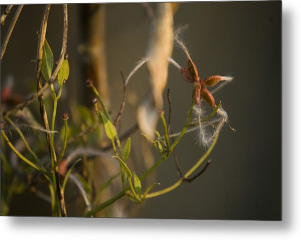 Feathery Seed  Metal Print