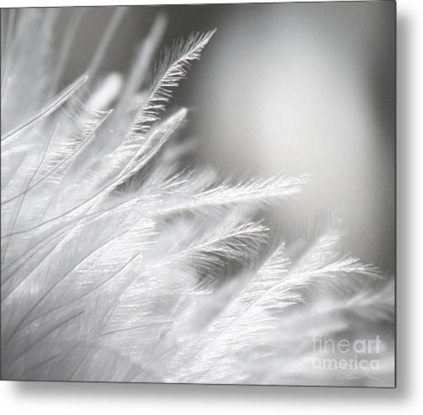 Feathery White Metal Print