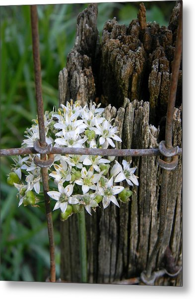 Fence And Flower Metal Print by Warren Thompson