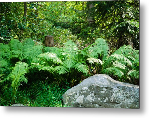 Ferns  At The Edge Of The Woods Metal Print by Anne Boyes