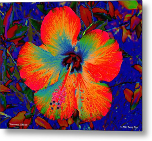 Festonned Hibiscus Metal Print