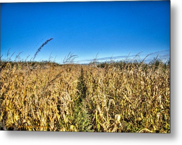 Fields Of Gold Metal Print by Dan Crosby