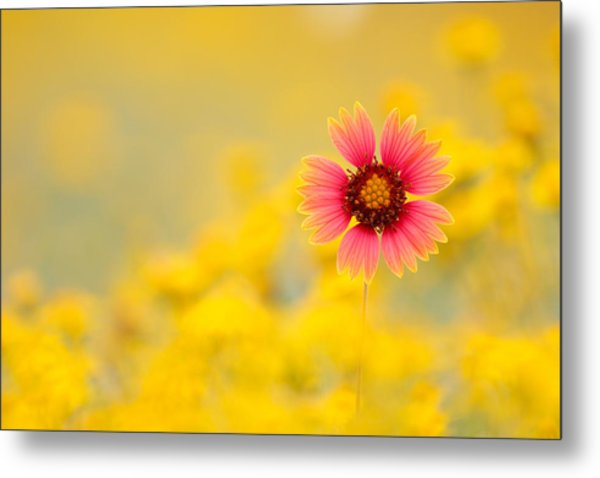 Firewheel Isolation Metal Print