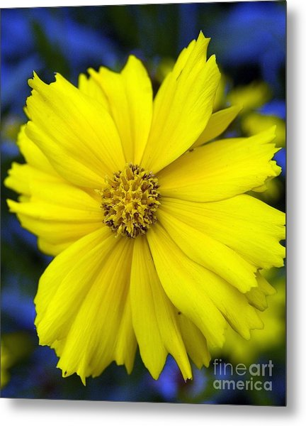 Firey Yellow Flower Metal Print