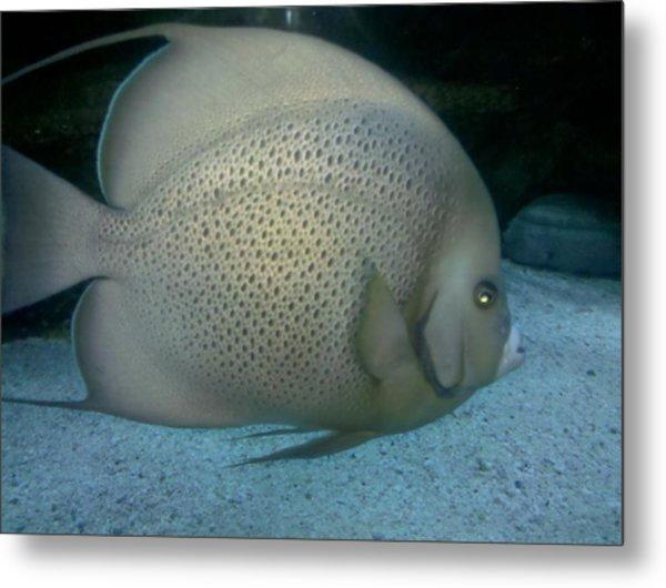 Fish In Motion Metal Print