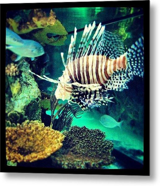 #fish #swag Metal Print