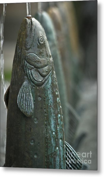 Fish Up Metal Print by David Taylor