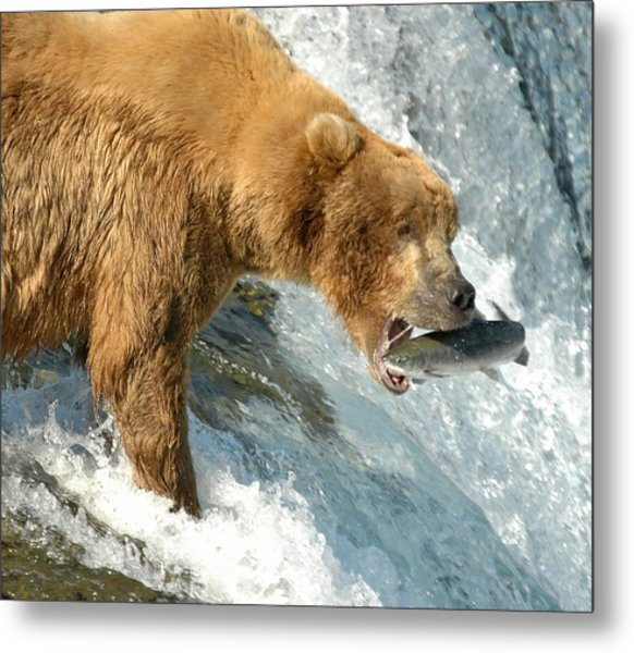Fishing Bear Metal Print
