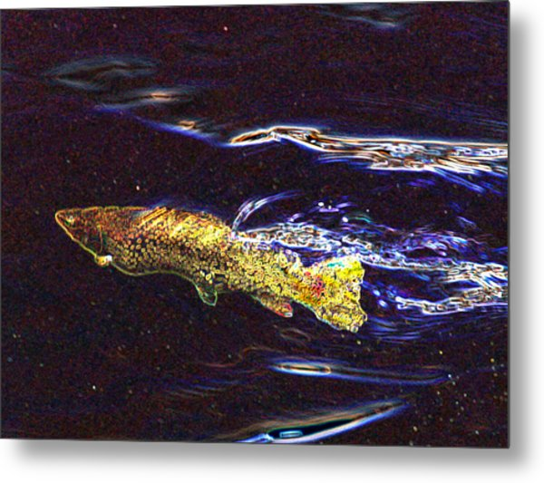 Fishy Fishy In The Brook Metal Print