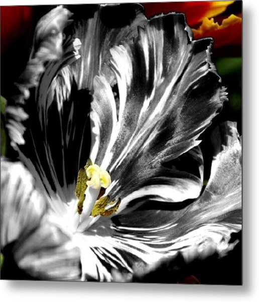 Flaming Flower 1 Metal Print