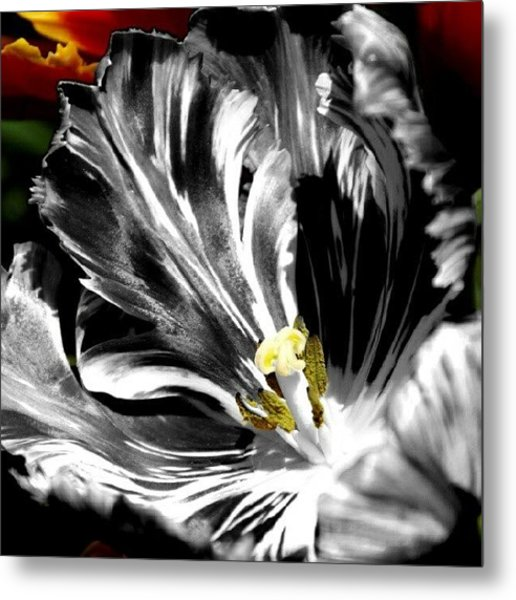 Flaming Flower 2 Metal Print
