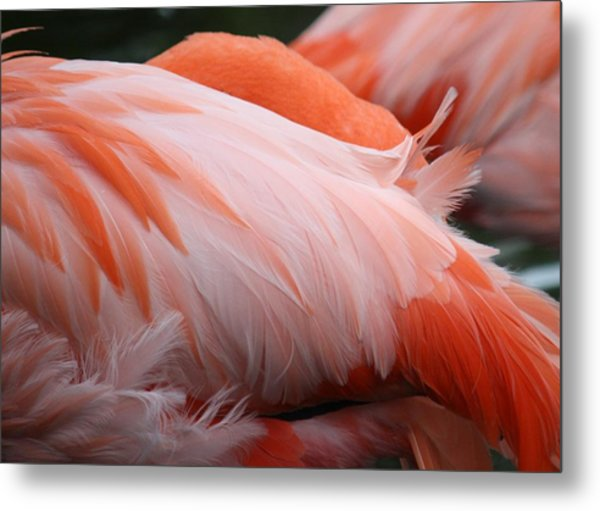 Flamingo Feathers Metal Print by Andrea  OConnell