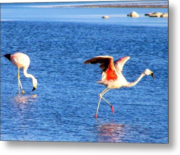 Flamingos Flamencos Metal Print