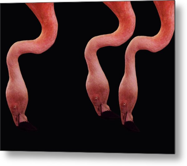 Flamingos Metal Print by Lourry Legarde