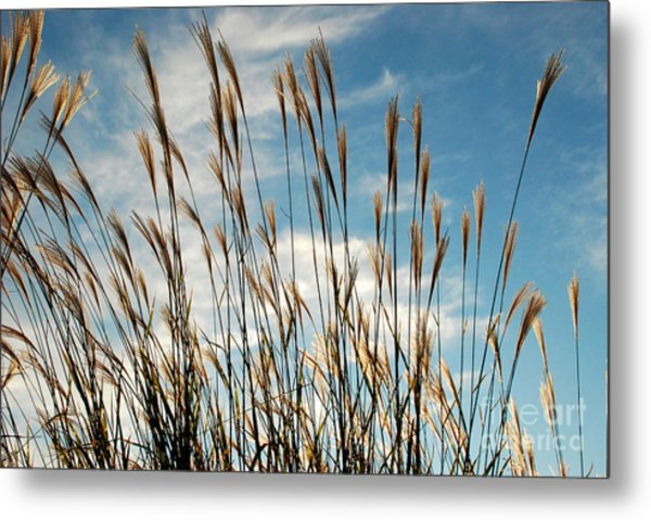 Flare To The Sky Metal Print