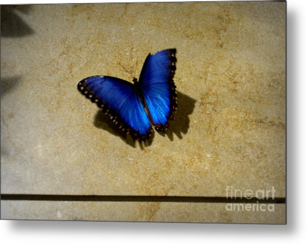Flawed Beauti-fly Metal Print by Nicole Tru Photography