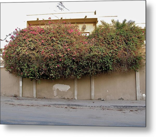 Florae In Doha Metal Print by David Ritsema