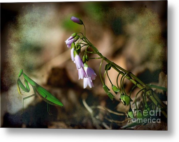 Floral Mantis Metal Print by The Stone Age
