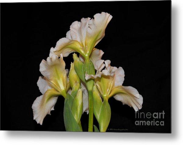 Floral White Iris Buds Flower Bouquet Metal Print