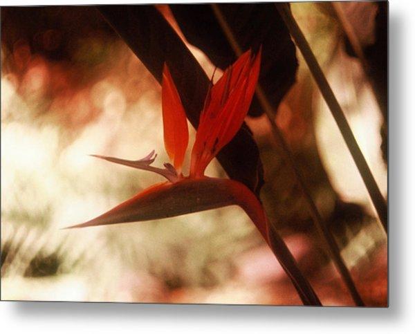 Flower 18 Metal Print