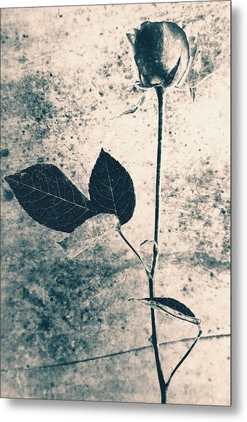 Flower Art Metal Print by Falko Follert