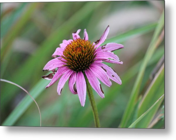 Flower At Waterfall Glen Forest Preserve Metal Print