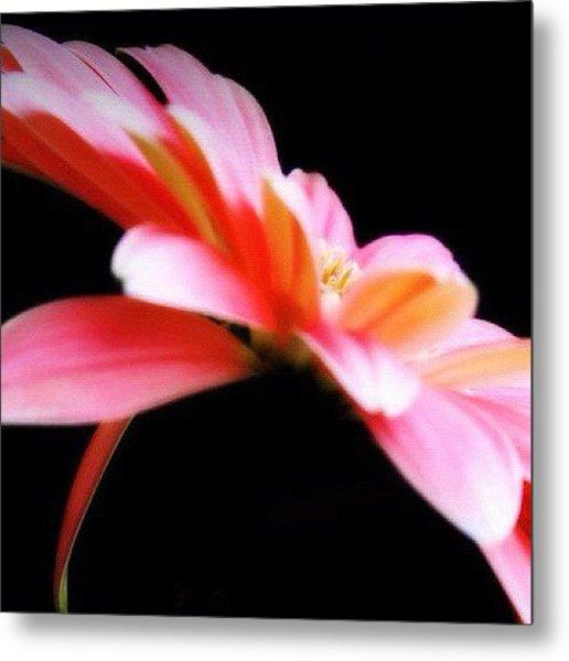 #flower #flowers #daisy #pretty #beauty Metal Print