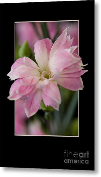 Flower In Frame -3 Metal Print
