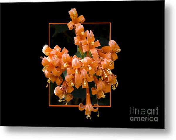 Flower In Frame -6 Metal Print