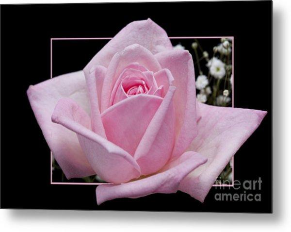 Flower In Frame -9 Metal Print