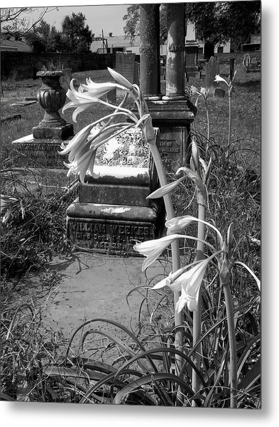 Flower Old Grave Metal Print by Floyd Smith