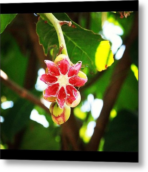 Flower Or Fruit?? Another Wonder Of Metal Print