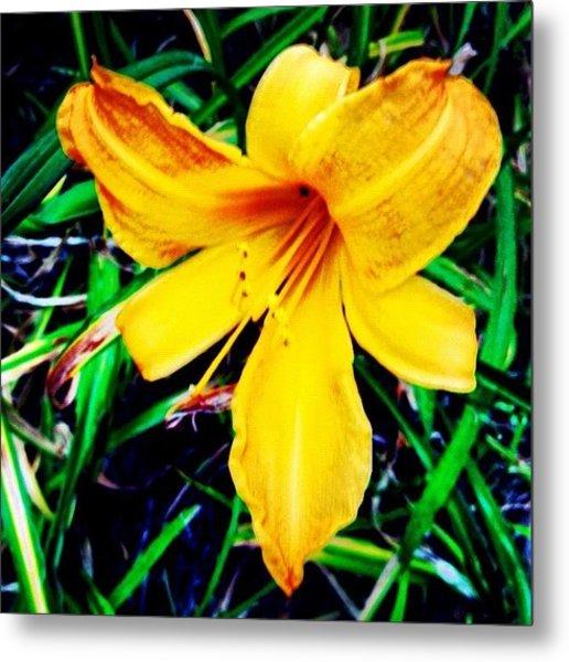 #flower #picoftheday #yellow #orange Metal Print