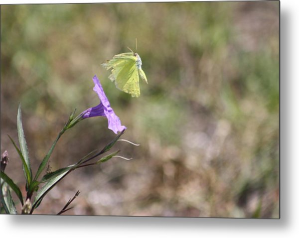 Flower Which Did Sway The Butterfly Flew Away Metal Print by Connie Koehler
