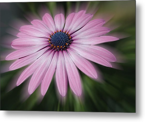 Flower Zoom Metal Print