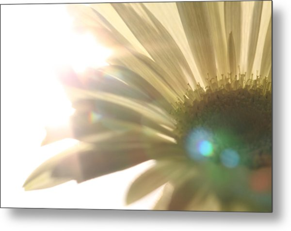Flowers Metal Print by Falko Follert