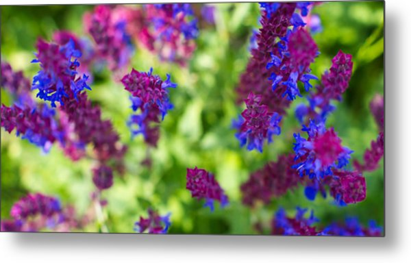 Flowers Metal Print by Guillermo Luengas