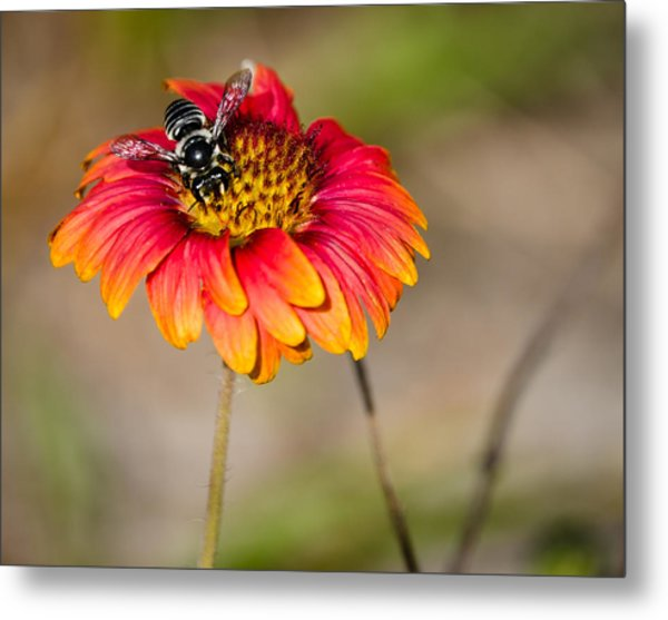 Flowers Metal Print by Mike Rivera