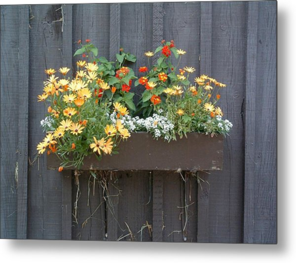 Flowers Summer Blooms On The Barn Metal Print